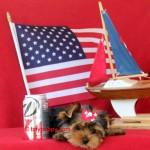 tiny yorkie, teacup puppy