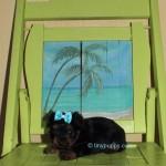 Black and Tan Yorkie Puppy, Yorkie puppy, tiny yorkie puppy