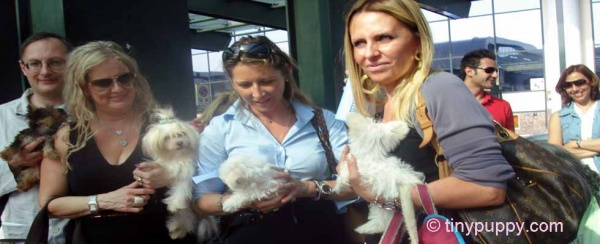 puppies-in-Milan-Italy